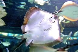 Aquarium 07