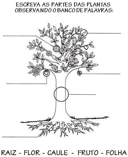 Atividades sobre as partes das plantas for Las partes de un arbol en ingles