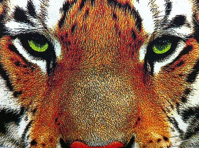 Kornit Close Up Tiger - Marshall Atkinson