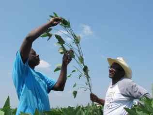 Black Farmers Soybean Law