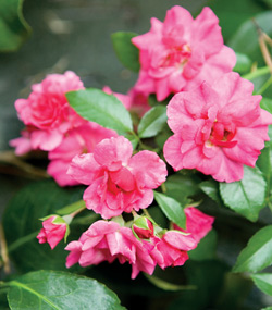 In summer, the planting scheme emphasizes colors such as deep reds and hot pinks.