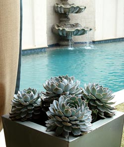 """Weber specified Echeveria for another aluminum container. """"I have these in pots at my house in San Miguel de Allende, Mexico,"""" she says. """"They love to be pot-bound and thrive there, especially where it's dry. They don't like to be too hot or too cold, but they have done very well for us in Atlanta as a summer-to-fall annual."""""""