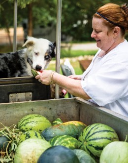 Chef Anne Quatrano gives Petey, a shepherd mix, a sample straight from the garden.