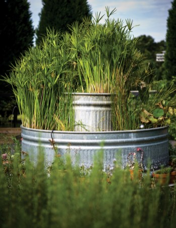 Quatrano designed a unique water garden feature on the property, using rustic troughs filled with water-thriving papyrus reeds.