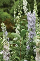 Some of Smith's latest additions to the garden include a bed of foxglove, delphiniums, columbine and roses.