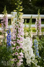 Varieties of larkspur fill a portion of the cutting garden.