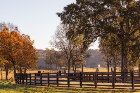 The length of the Pursell Farms driveway is the exact amount of time you need to decompress and begin your relaxing visit.