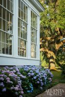 hydrangea under windows