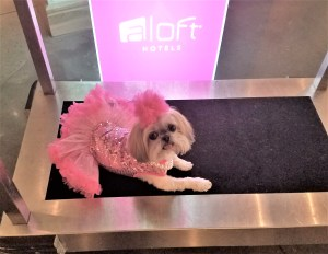 Sparkles Diva at Staff at The Aloft Hotel Downtown New Orleans with Sparkles