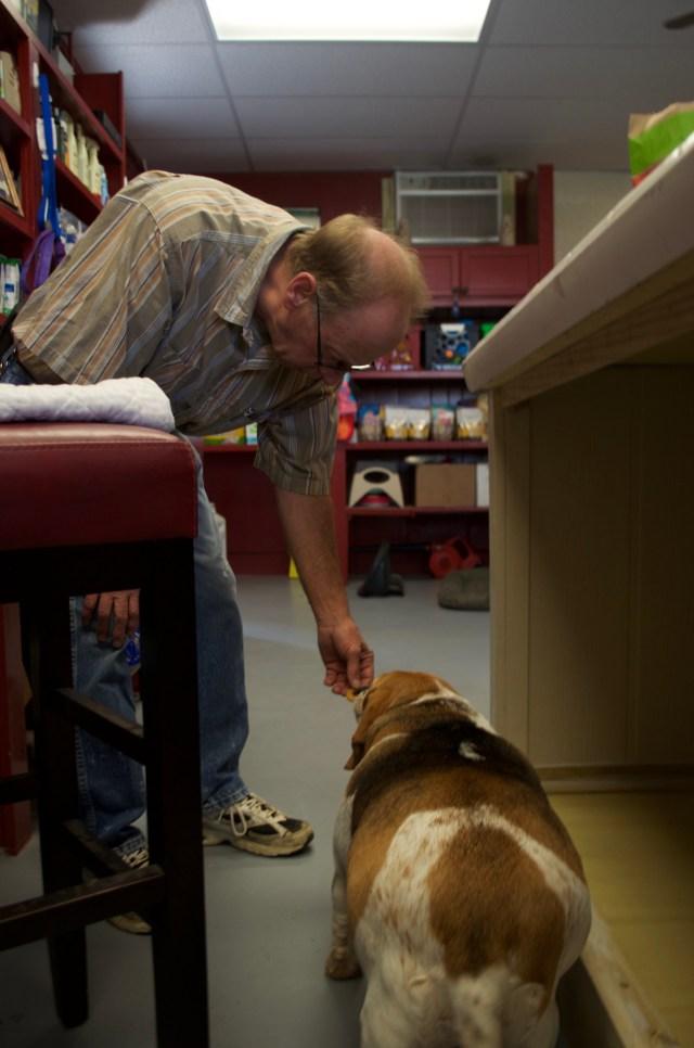 Betsy, a plump 16-year-old beagle