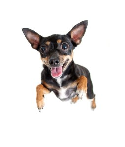 7 ways a furbaby will change your life.