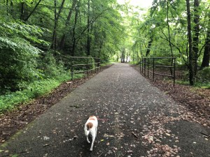 Paces Mill Park and West Palisades Trail: If you're looking for fall foliage close to home, pack up your pup and hit the West Palisades Trail.