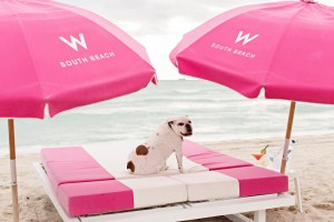 W South Beach lets your dog experience the sand and surf.