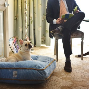 Plush beds spoil your pooch at Windsor Court NOLA.
