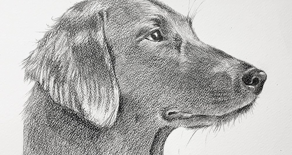 Example of a commissioned drawing by Atlanta Weiss. Detail