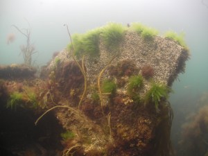 Part of UB 86 underwater