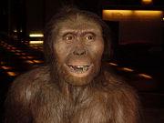 Abb. 5 Rekonstruktion eines Australopithecus afarensis