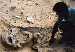 Abb. 8 Hier das angeblich 'authentische' Foto des saudischen Riesenskeletts, das Dr. Paley von einem Informanten zugesandt wurde