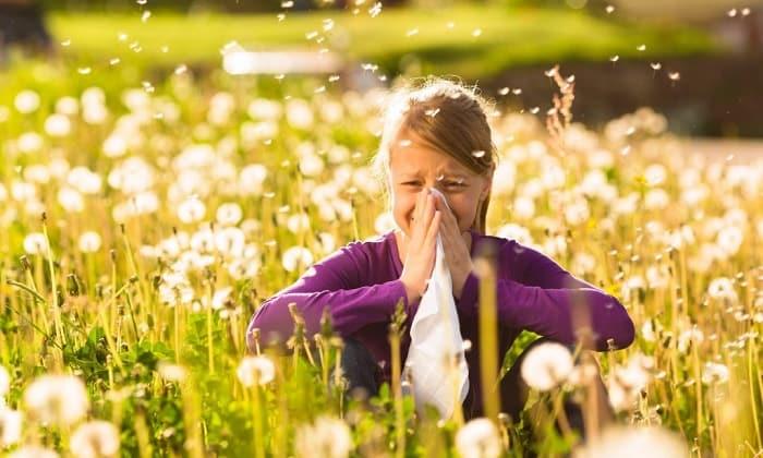 Allergy Testing in Carrollwood