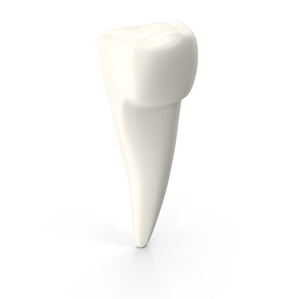 Pre Molar Tooth PNG Images Amp PSDs For Download