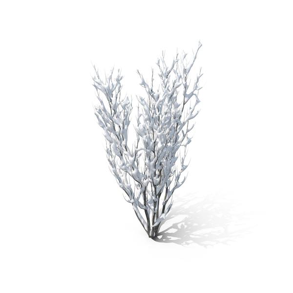 Winter Bush PNG Images Amp PSDs For Download PixelSquid