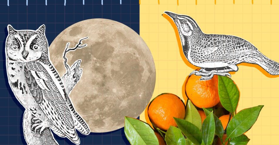 Mixed media illustration of night owl and early bird with moon and oranges