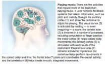 music and the brain do
