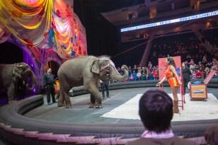 elephant painting 2
