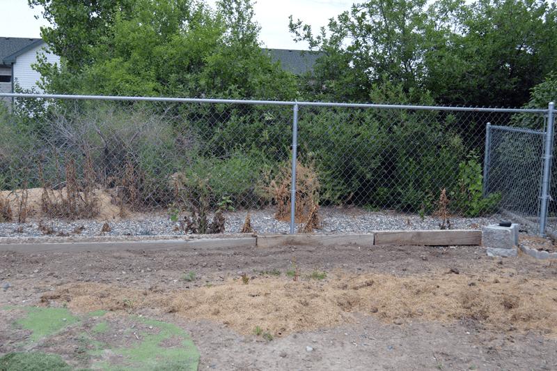 grannie geek North garden fence line before perennials