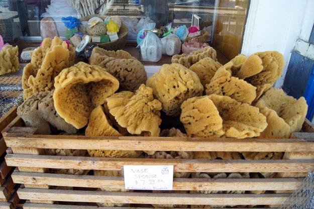 at mimis table tarpon springs sponges 3