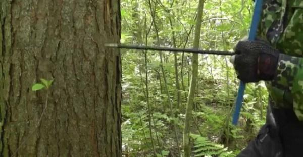 Таксация леса и таксация насаждений