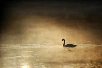 Swan of Tuonela | May 7, 2013, 6:02 am