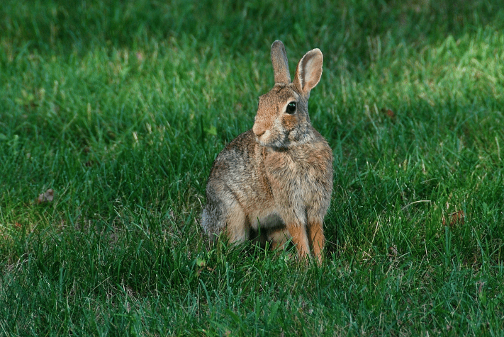 4. Cottontail | July 24, 2013, 5:51:53 pm