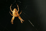 Spider on Web | September 29, 2014, 7:45 am
