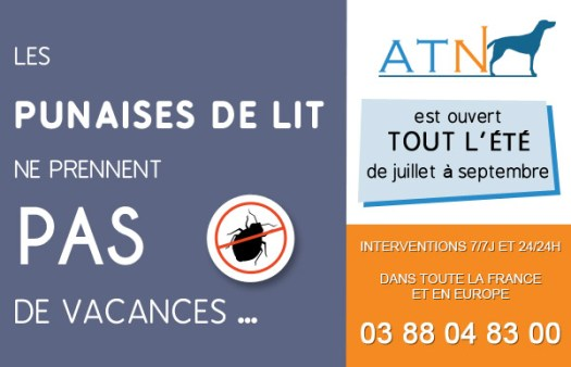 ATN-punaises de lit Paris, Lyon, Marseille, Strasbourg , France, Europe