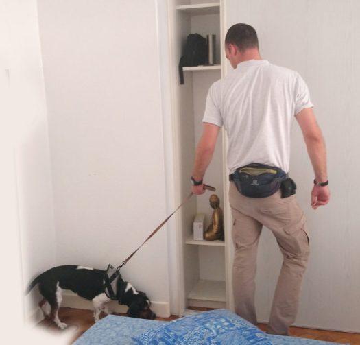 détection punaises chien renifleur