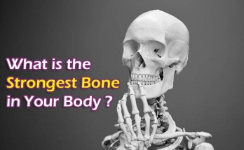 smallest bone in the body, longest bone in the body, strongest bone in the body, largest bone in the body, what is the smallest bone in the body, what is the strongest bone in your body, what is the largest bone in the body, smallest bone in the human body, what is the longest bone in the body, long bone in upper body, smallest bone in human body, where is the smallest bone in the body, biggest bone in the body, hardest bone in the body, what is the only jointless bone in the human body, what is the smallest bone in your body, identify the bone that articulates with the distal end of the femur., is the only movable bone in the skull., where is the hyoid bone located, smallest bone in your body, what is the smallest bone in the human body,