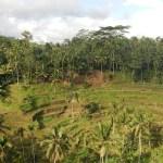 Bali, la isla que no te esperas, y las Gili con amigos