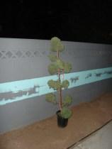 65-topiary