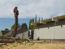 front-tree