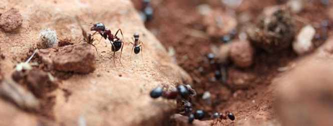 You May Be Able To Exterminate Ants Without Calling In A Professional Though More Severe Infestations Will Require Stronger Approach