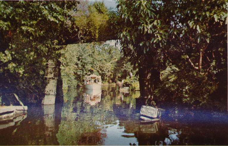 A Jungle Cruise boat glides along one of the many waterways, massive green foliage hangs above and off to the side.