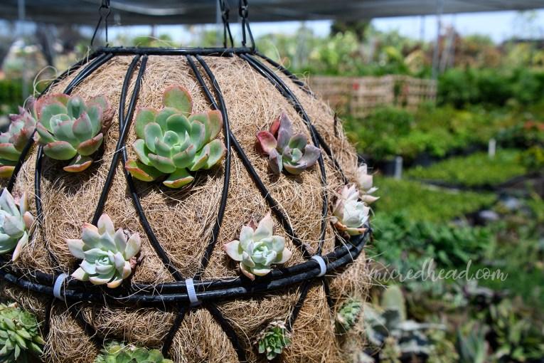 A hanging succulent pot