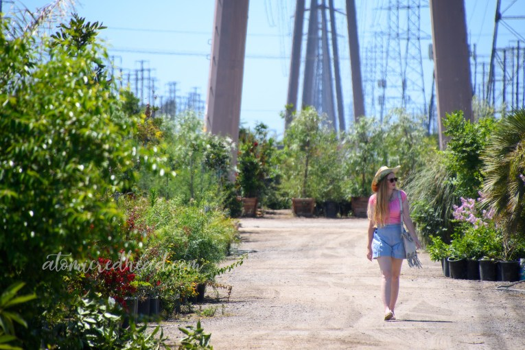 Walking through the nursery, which is located along lengthy power lines that extend over the plants and into the distance.