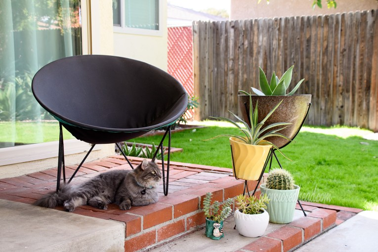 Our fluffy grey cat, Colonel Whiskers sits under a circular chair. Next to the chairs are various ceramic planters with cacti and succulants.