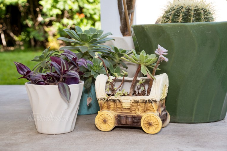 Various ceramic planters, one in the shape of a covered wagon, are home to various cacti and succulents.