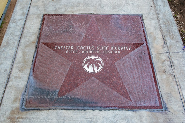 "A large dark red star reads ""Chester 'Cactus Slim' Moorten Actor/Botanical Desginer"""