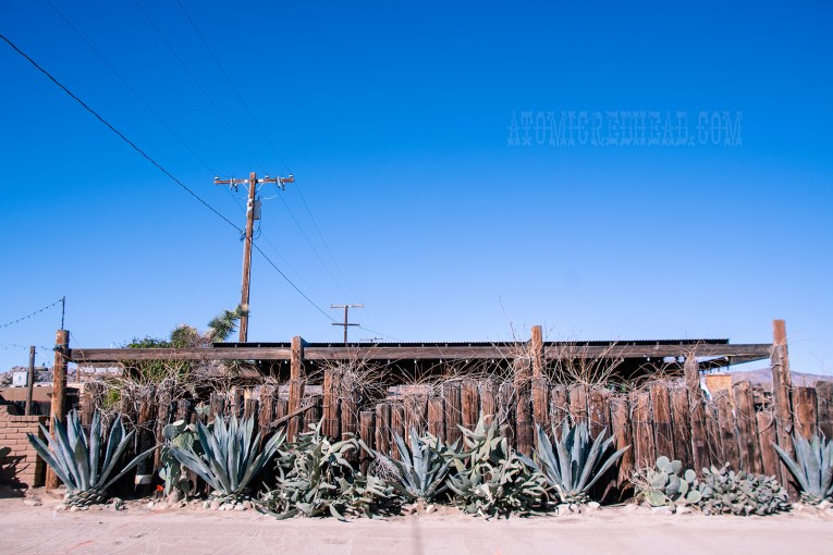 Various cacti thrive along side Pappy & Harriet's.