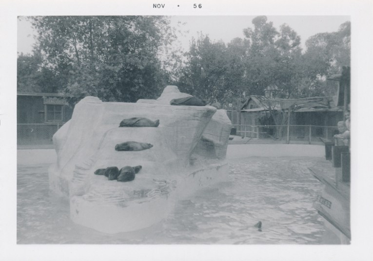 A black and white photo of the seal pool. A man made rock juts from the pool, with four seals lounging on it.