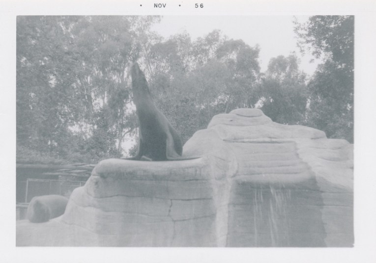 A black and white photo of a seal on the rock in the middle of the pool.